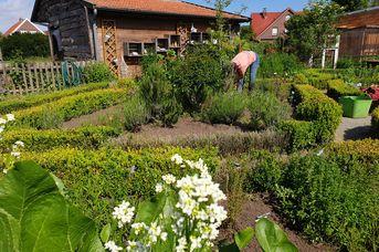 Kräuterfrau im Garten