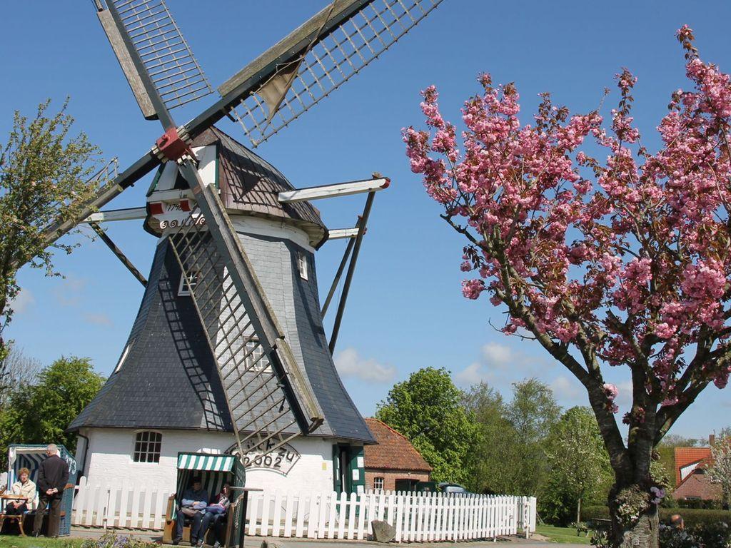 Blick auf die Mühle im Mai
