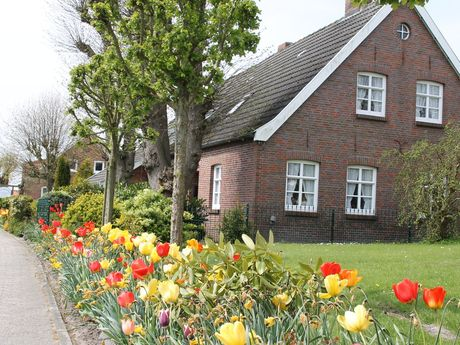 Tulpen am Straßenrand mit Blick auf ein Haus