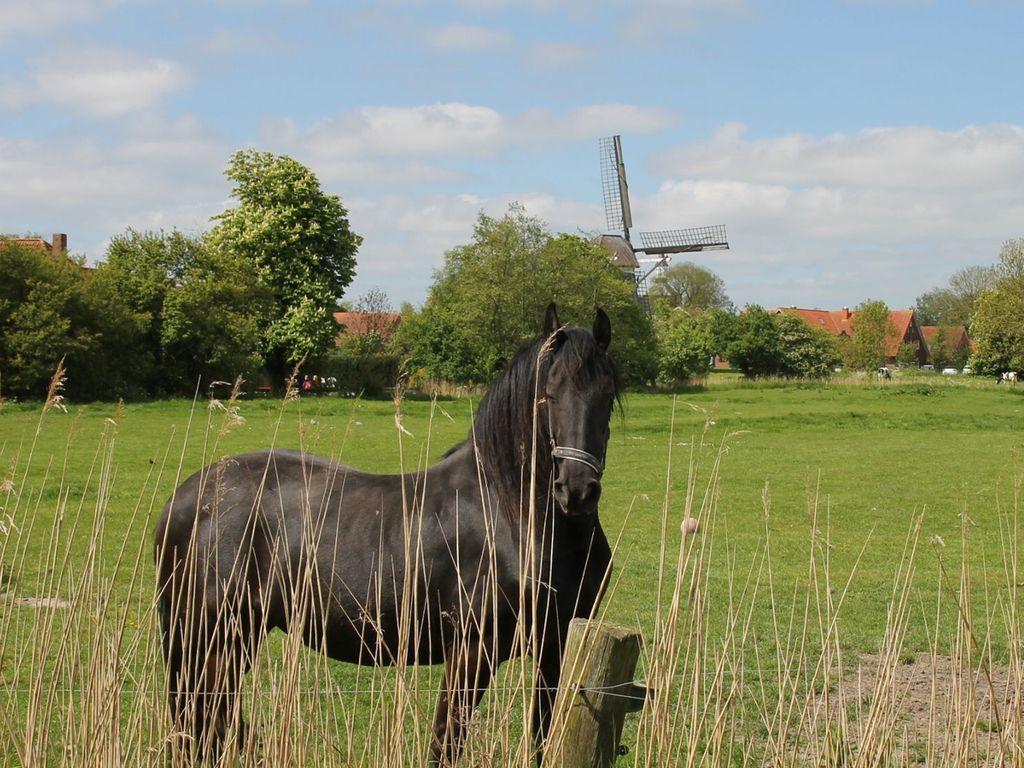 Pferd auf der grünen Wiese im Vordergrund mit Blick auf die Mühlenflügel der Werdumer Mühle