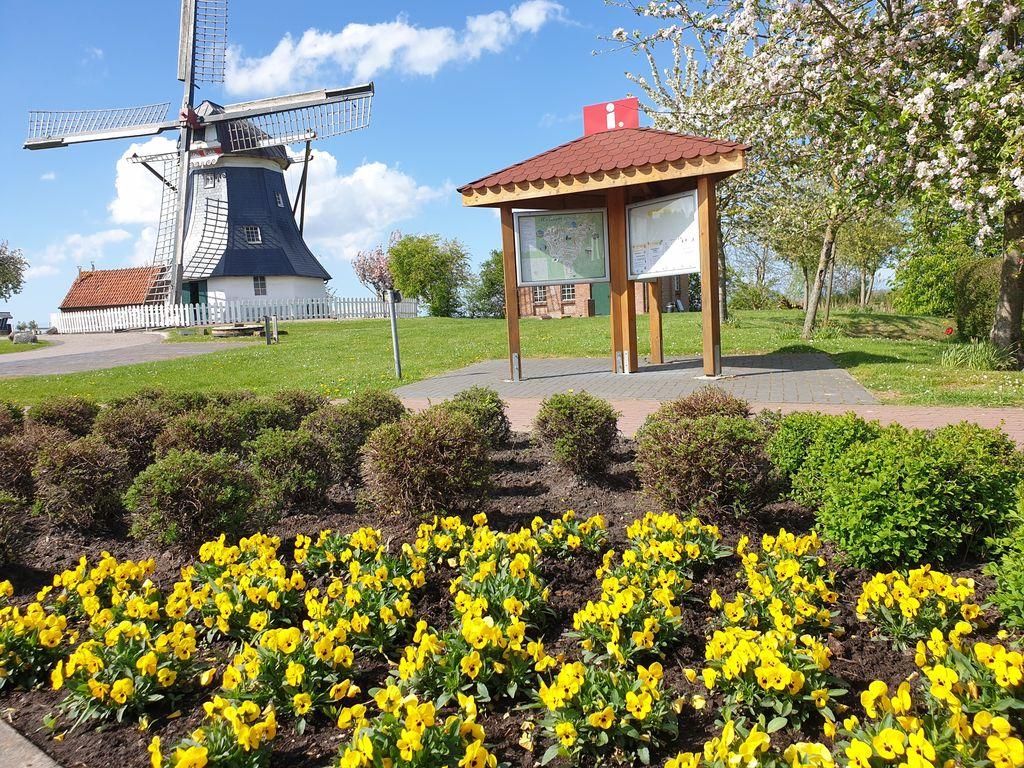 Blick auf die Mühle und Infokasten, im Vordergrund ein Blumenbeet