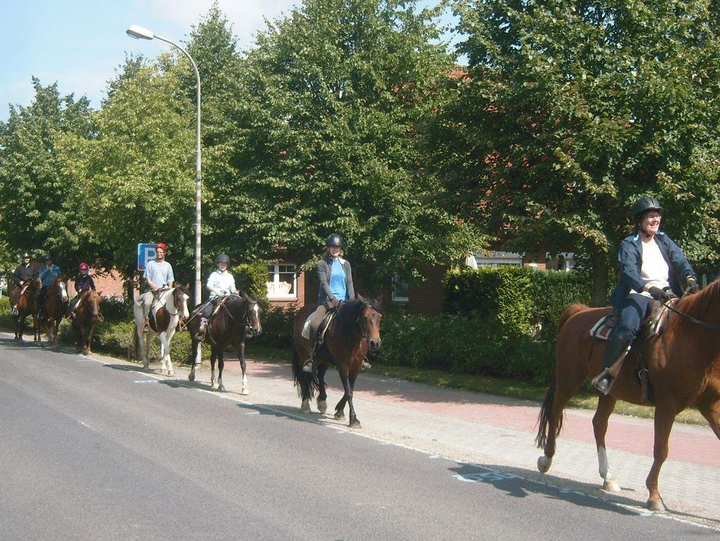 Eine Pferde mit Reiter laufen hintereinander am Straßenrand