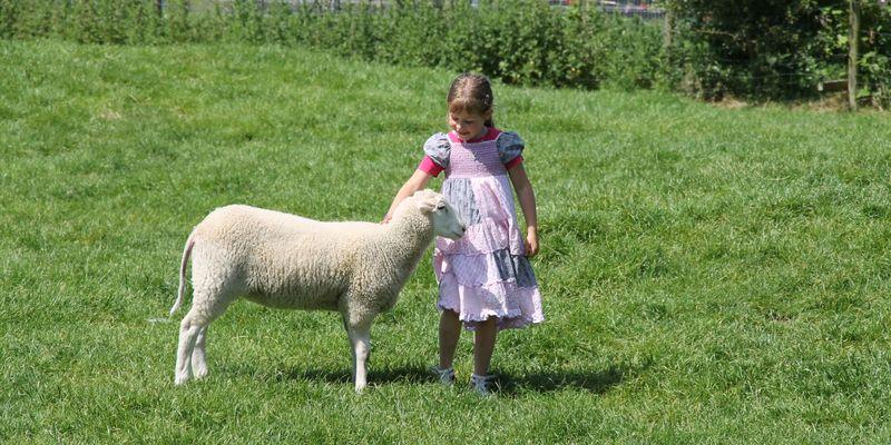 Mädchen streichelt Schaf auf der Streichelwiese