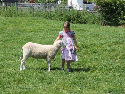 Ein Mädchen streichelt ein Schaf