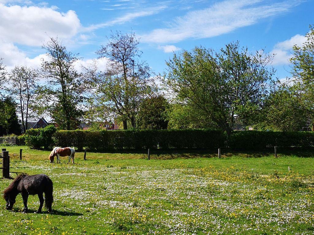 Blühende Wiese mit zwei Ponys und viel grün im Hintergrund