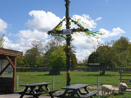 Das Bild zeigt den aufgestellten Maibaum im Haustierpark