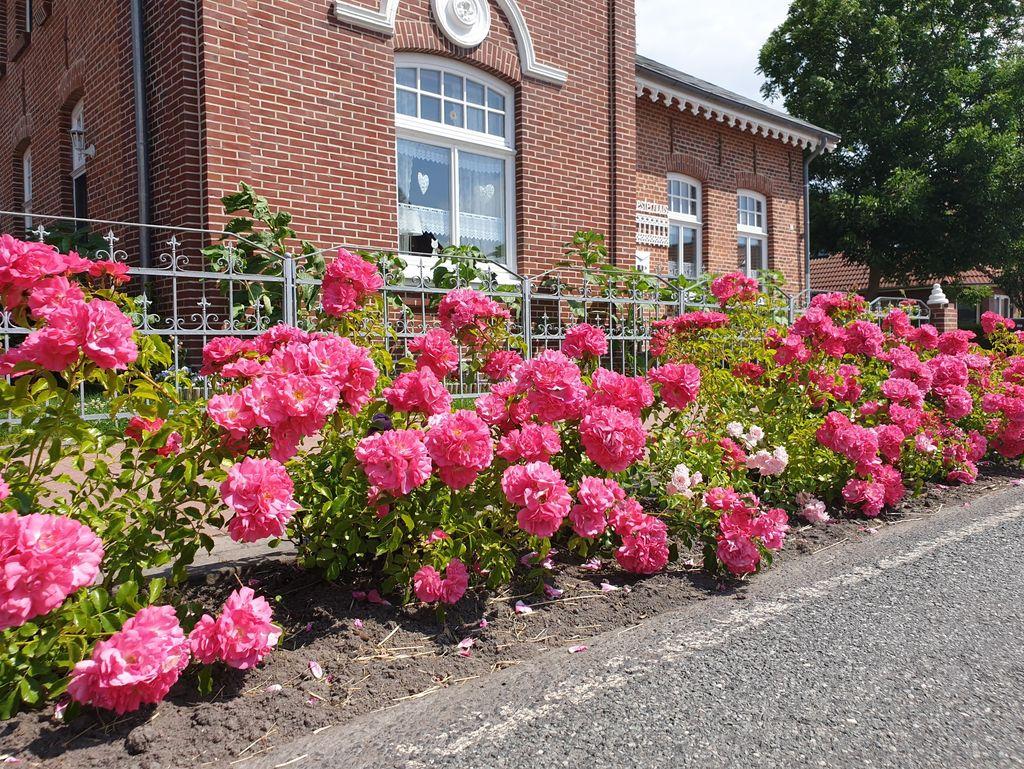 Blumen vor einem Haus an der Edenserloogerstraße