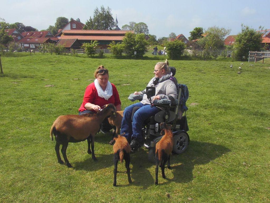 Eine Dame im Rollstuhl ist auf der Streichelwiese umgeben von kleinen Schafen