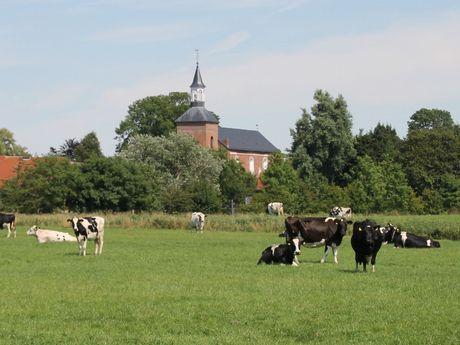 Blick auf die grünen Wiesen und die Werdumer Kirche im Hintergrund